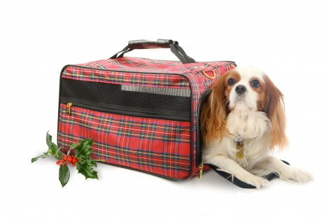 tartan holly-bag